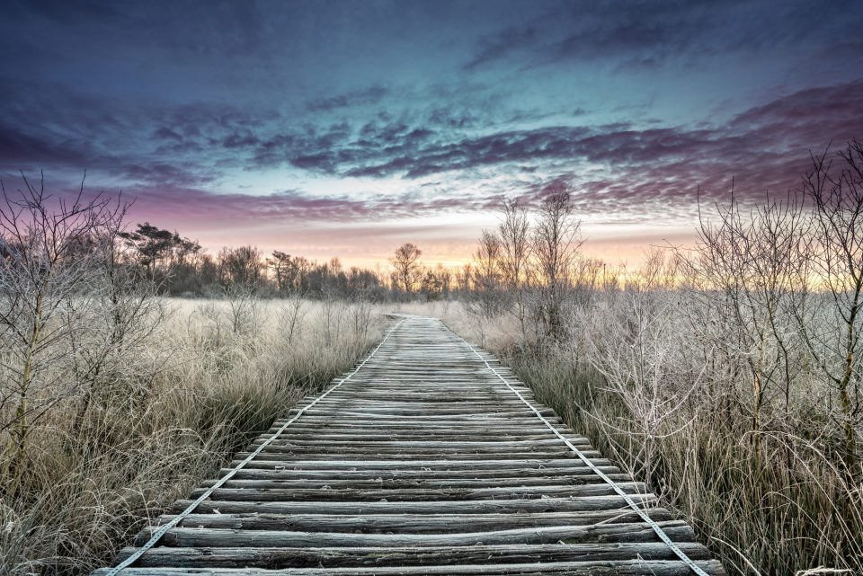 sunrise in Limburg. Wooden pathway through national park de groote peel on the border between Limburg and North Brabant in the Netherlands. Winter landscape.