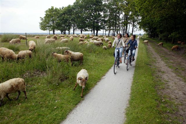 Drenthe-fietsvakantie